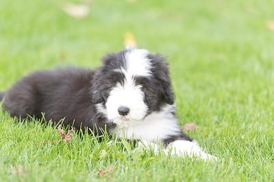 Puppies October 2021