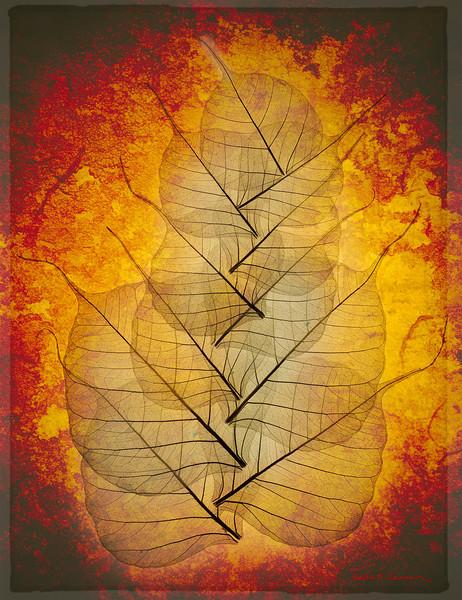 Wisdom's fire