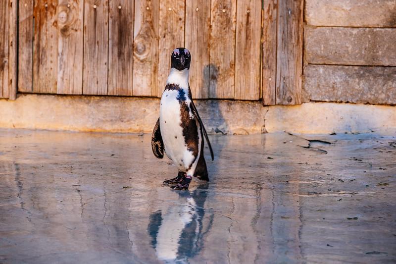 Tonis Zoo-0442.jpg