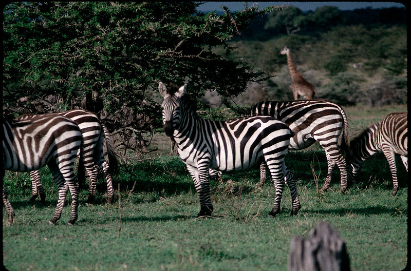 Kenya2_011.jpg