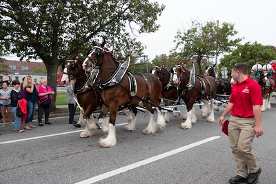 Clydesdales - Patchoque Oct 2018
