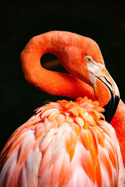 birds-1-4.jpg