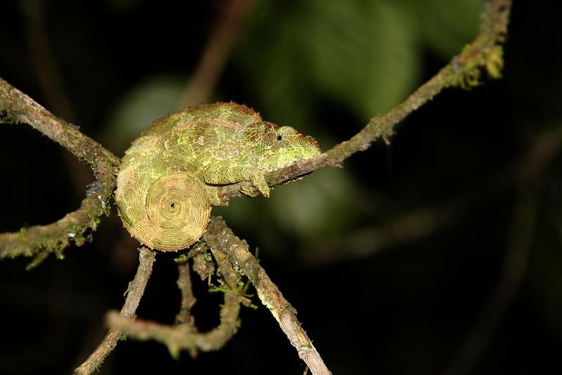 Madagascar, Fauna & Flora 4 Oda.jpg