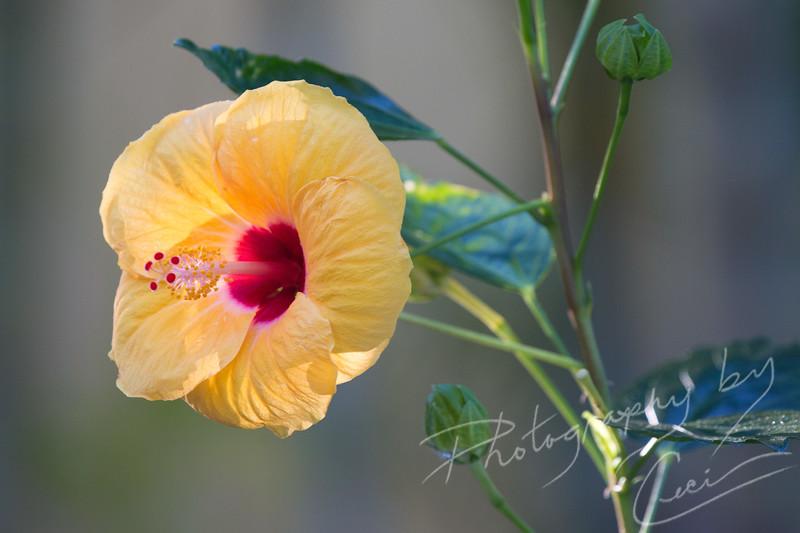 2016-02-22-Kona Hawaii 2016-1718.jpg