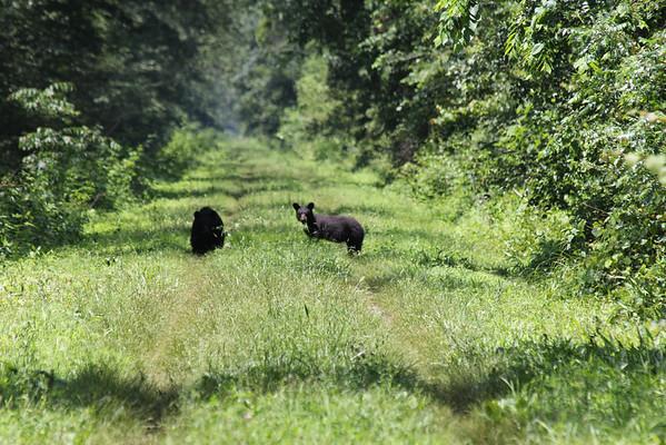 Washington Ditch Wildlife