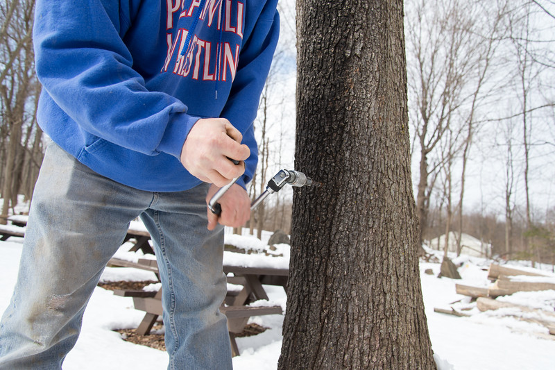 03/06/19  Wesley Bunnell | Staff  Rusty Spence uses a hand drill to tap into a tree that will be used to collect syrup on the grounds of the New Britain Youth Museum at Hungerford Park.