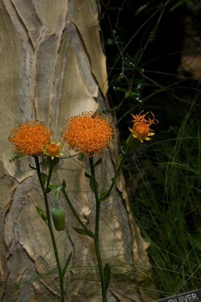 IMG_9304-pumpkins-www.jpg