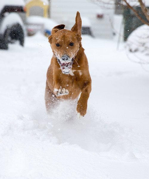 Ziggy running through the snow.jpg
