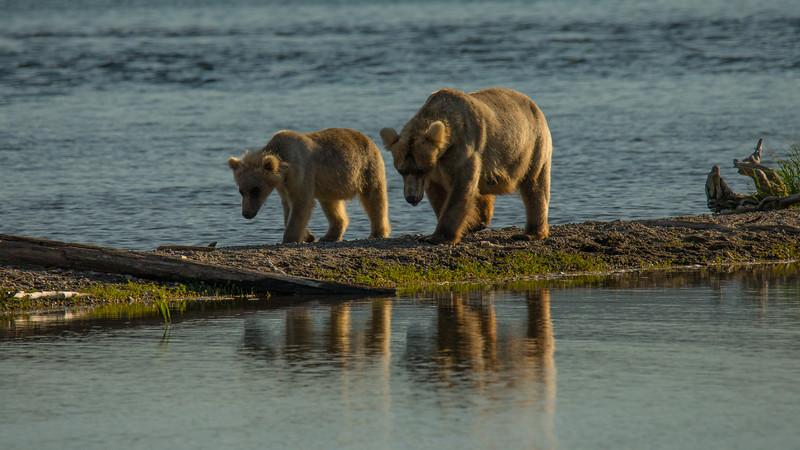 Katmai Bears-29.jpg