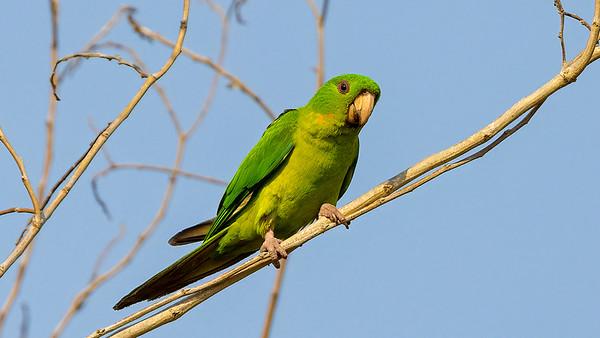 Rio Grande Valley Birds