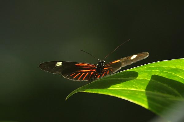 Butterflies at Meijer Gardens - 4/7/18