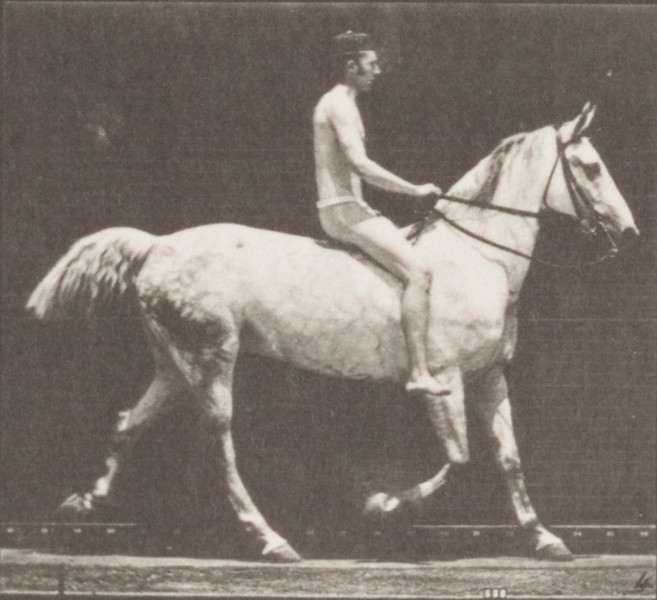Horse Smith trotting, bareback with nude rider