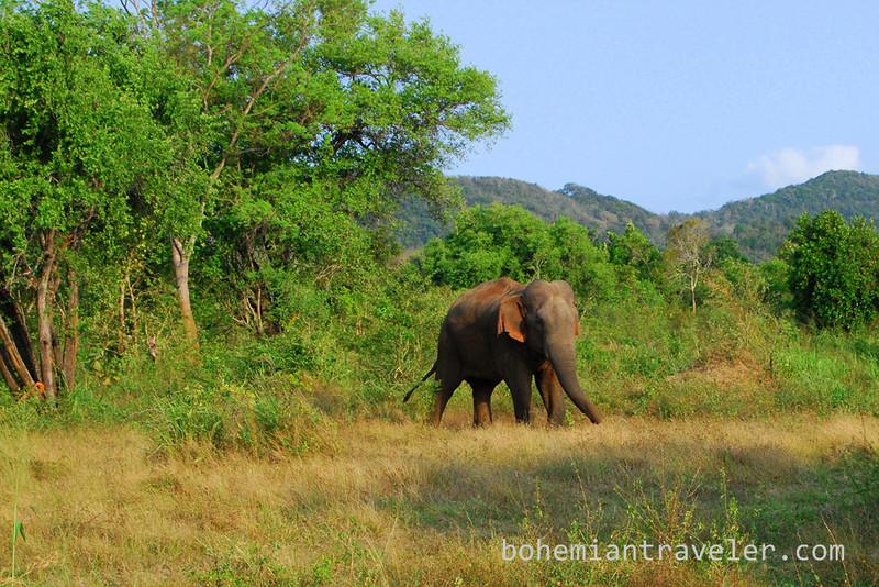 elephant in Habarana Eco Park (6).jpg