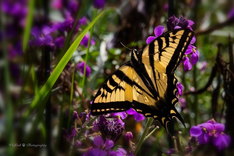 butterfly-23WC.jpg