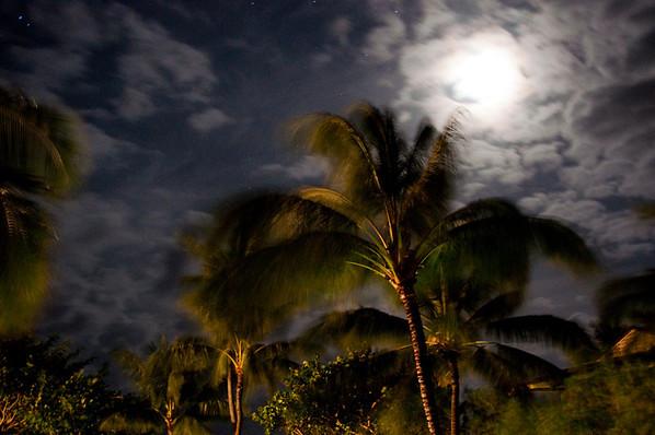 Palms at Night