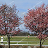 170224 KEENELAND GOOD MORNING (174)