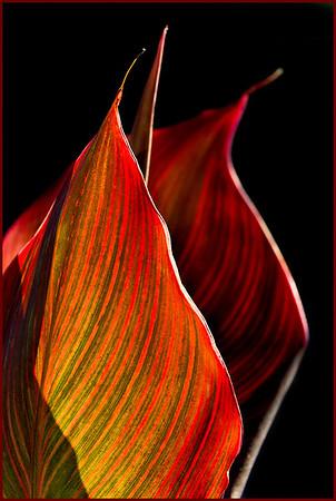 Series:  Leaves