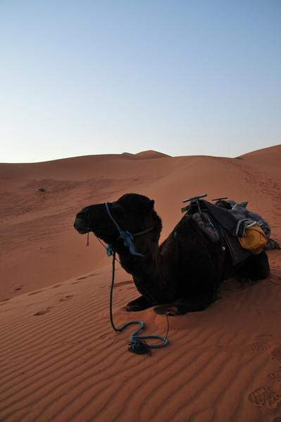 day4-SaharaCamp-22.jpg