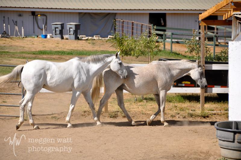 EB&Horses-095.jpg