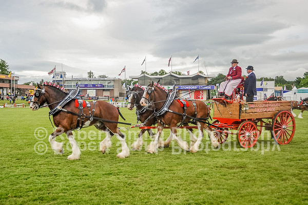 Clydesdales @Royal Highland Show 2015