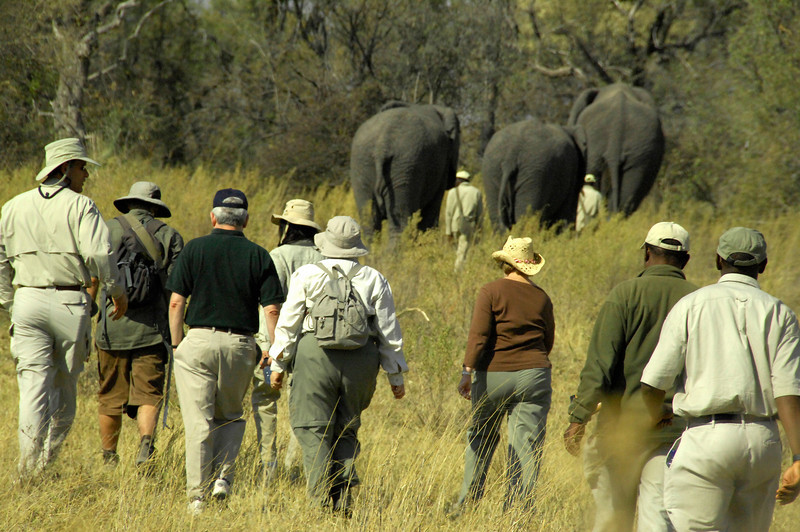 EPV0420 Walking with the Elephants.jpg