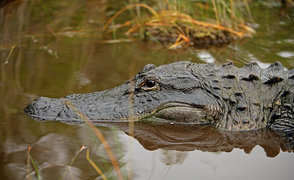 Florida Everglades and Wakodahachie Bird Sanctuary
