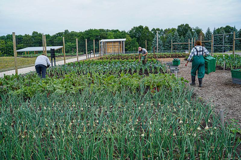 Arboretum, July Harvest-67.JPG