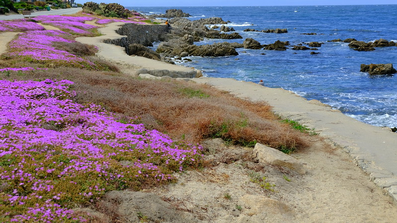 California Day 3 Monterey 05-29-2017 19.JPG