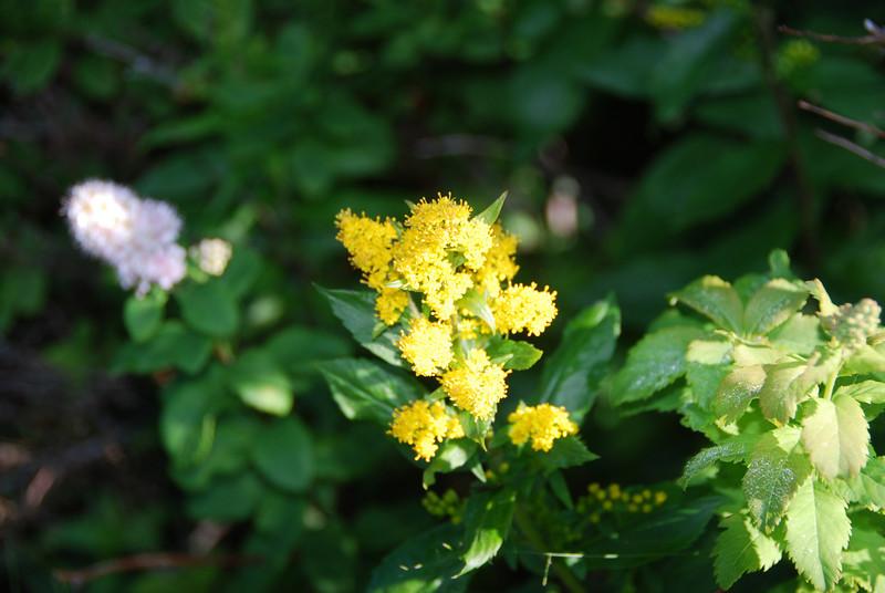 Flowers - 23