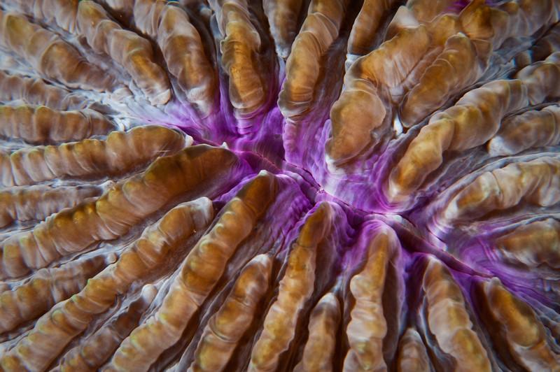 pattern hard coral-6615.jpg