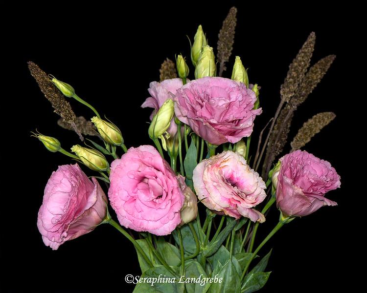 _DSC0862Best Ranucula bouquet.jpg