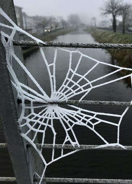 Frosty_Web_Dec20.jpg