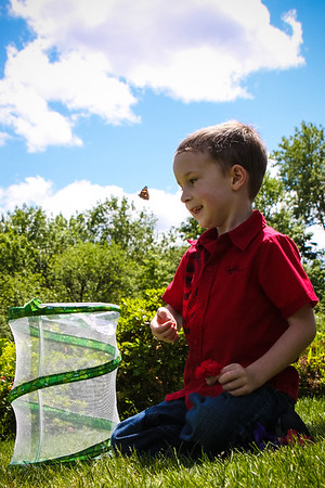 Dougy and The Butterflies