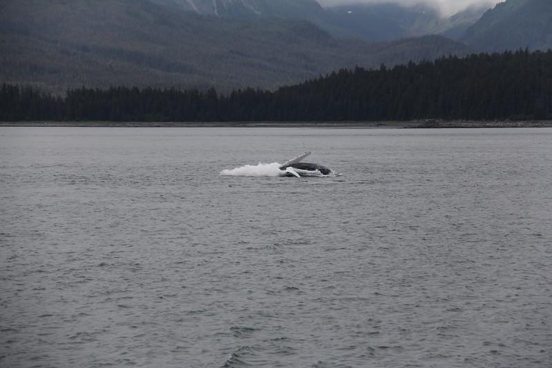 20160717-113 - WEX-Breaching Whale.JPG