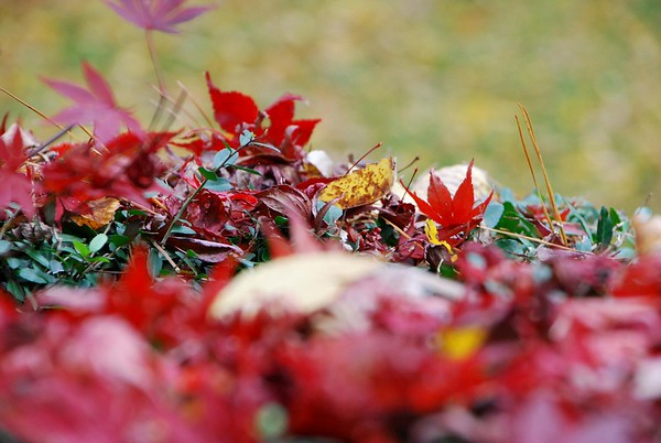 Fall-Images-in-Chapel-Hill