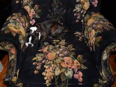 Camouflage? No, Doggoflage!
