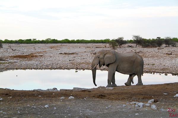 elephant at waterhole in Etosha National Park, Namibia 1