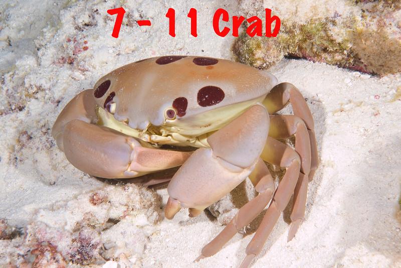7-11 Crab...7 a.jpg