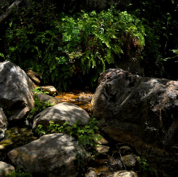 Fern and rock shadows.jpg