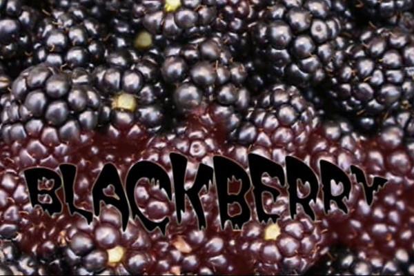 blackberryMovieForWeb-ViaFile.mpg