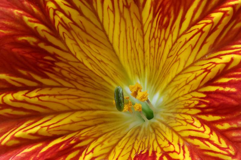 Pretty Flower03.jpg