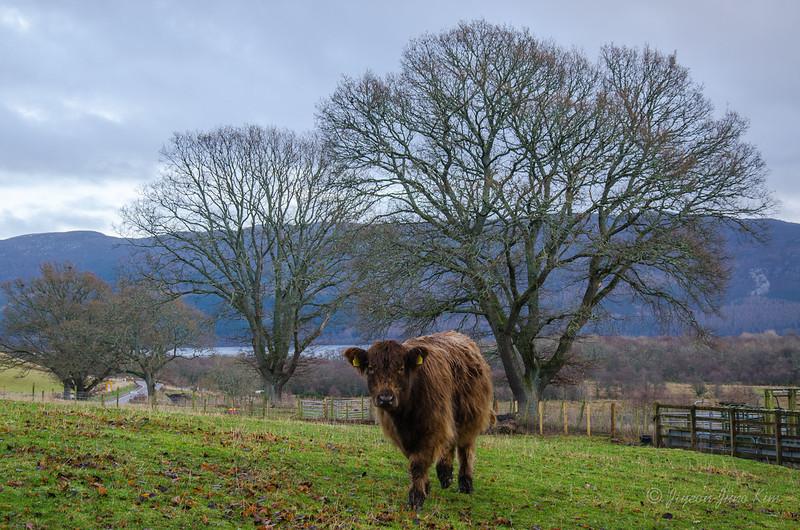 Scotland-Loch-Ness-8720.jpg