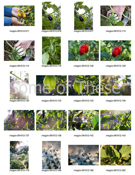 Plants Collage-1.jpg
