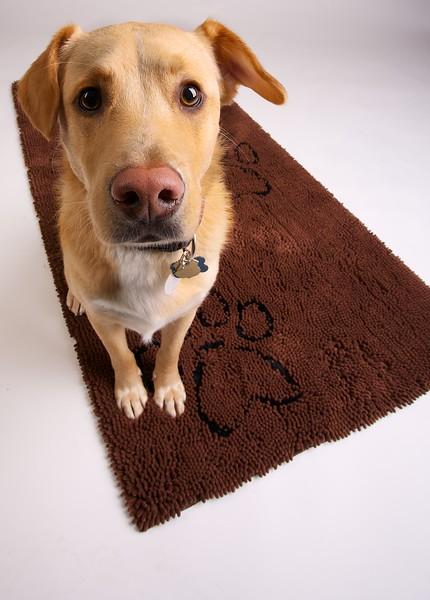 Client: Dog Gone Smart