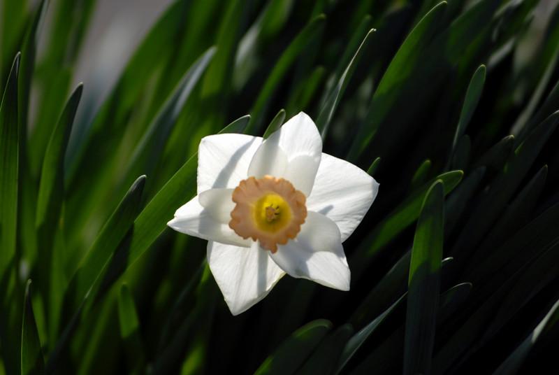 unknown flower.jpg