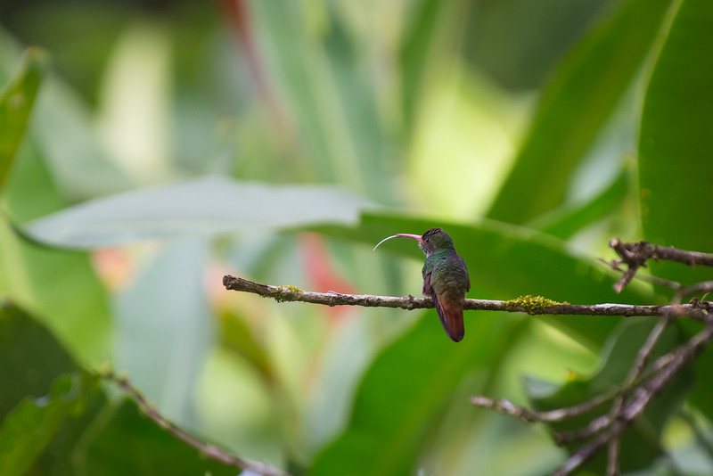 Hummingbird Morning