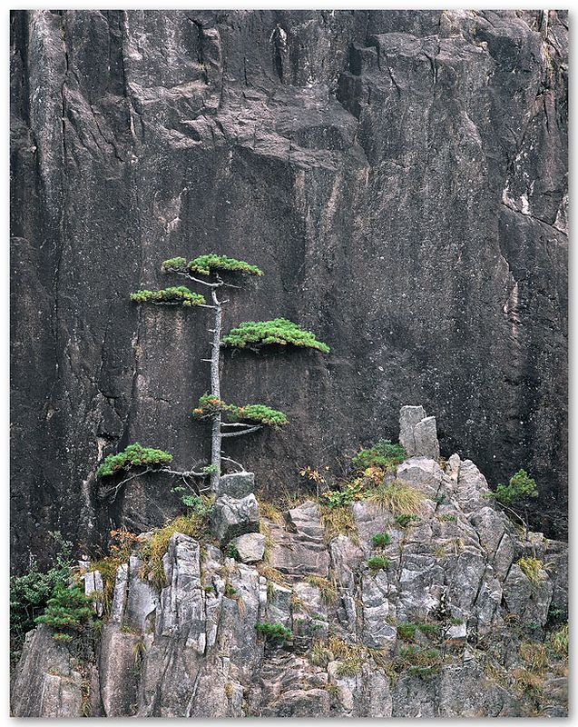 Pine and Cliff