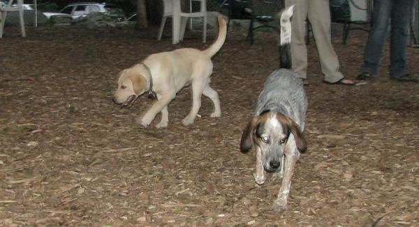 PICS JUNE 12::Fraser & LULU ( pup nite)