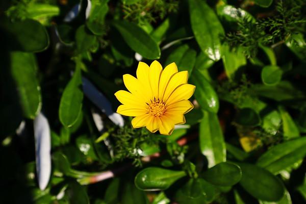 0716 - Flower Garden