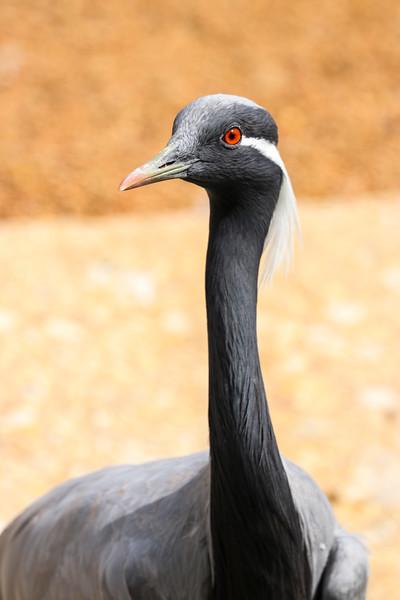 Bird IMG_1264.jpg